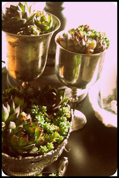 Vintage silver with succulents. Thinking about putting small succulents in silver tea set for summer display in dining room builtins