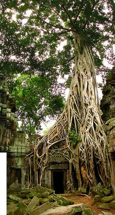 UNESCO World Heritage monastic temple of Ta Prohm at Angkor- Cambodia… Deck Canopy, Backyard Canopy, Garden Canopy, Canopy Outdoor, Window Canopy, Metal Canopy, Abandoned Places, Places To See, Beautiful Places