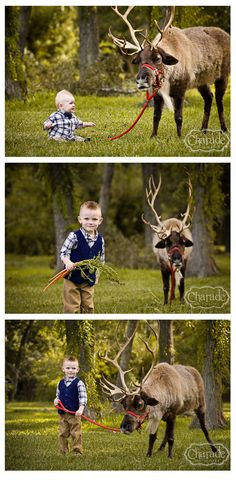 Christmas photos with a live reindeer!  #reindeer #christmasphotos  #charadephotography #houstontxphotographer #PinoftheDay