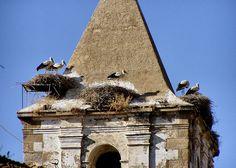 Storks in Cáceres, Spain