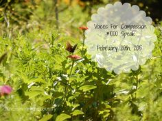 1000 Voices -join us in spreading the message of compassion!