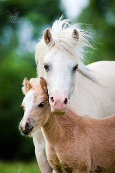Beautiful horses. Mare and sweet foal.
