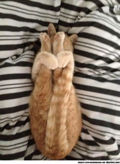 """Yoga cat, """"And hold, two, three, four."""""""