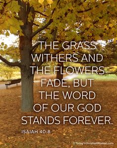 Isaiah 40:8 - The grass withers . . . , but the word of our God stands forever.