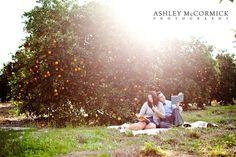 Florida Orange Groves