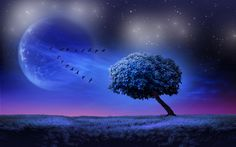 To the Moon - lone tree as fine art