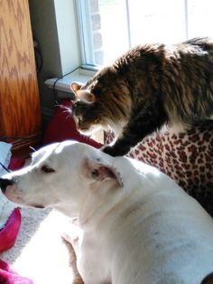 My dog and cat..... Rare moment