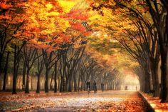 Autumn color #2 - Incheon park in Incheon, Korea.
