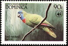 Red-necked Amazon stamps - mainly images - gallery format