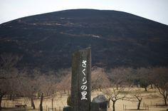 今年は、東京出張で大室山の山焼きは見れなかった。さくらの里を散歩してると、まだ焼け跡の焦げた匂いが風に流れてくる。