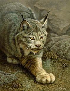 Cat Painting - Stalking Lynx by Paul Krapf Wildlife Paintings, Wildlife Art, Animal Paintings, Animal Drawings, Big Cats Art, Cat Art, Lynx, Feather Painting, Beautiful Cats