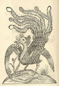 "Gallus Indicus auritus tridactylus ""Ulissi Aldrovandi (Aldrovandus) Woodcut illustrations from Aldrovandi's 'History of Monsters' Medieval Drawings, Medieval Art, Fantasy Creatures, Mythical Creatures, Historia Natural, Dragons, Demonology, Antique Illustration, Bird Art"