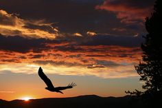 Eagle flying past as the sun is setting.   Available at IncrediblePhotoArt.com
