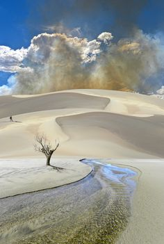 Clouds, sand & tree. Photography by Peter Holme III