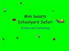 Schoolyard Safari