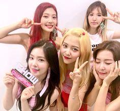 Red Velvet Show Champion