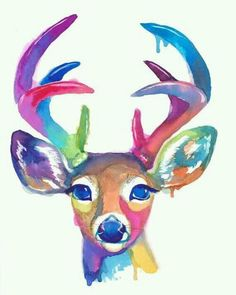 bonito deer