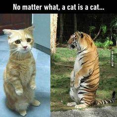 Cat is a cat