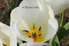 KTBelleCrafts Handmade blog (photography, painting, glass crafts and hand blown eggs)