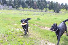 Funny dogs!  Fetching Florals Blog