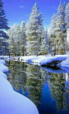 ❄️ Winter blue is magic❄️ Amazing reflection of the beautiful snow covered pine trees! Winter Magic, Winter Snow, Winter Photography, Nature Photography, Winter Wonderland, Winter Scenery, Snow Scenes, Winter Pictures, Winter Beauty