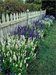 Hamptons Garden Landscaping Salvias, also called sages, are easy to grow, bloom abundantly, and great looking in the landscape. Use this guide to find the best types of salvia for your garden. Small Cottage Garden Ideas, Garden Cottage, Garden Bar, Front House Garden Ideas, Td Garden, Sunken Garden, Sloped Garden, Fence Garden, Gravel Garden