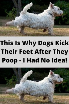 It might seem like kicking up their paws is silly, but as it turns out — there's a rhyme and a reason for their odd behavior. Baby Animals, Cute Animals, Funny Jokes, Hilarious, Viral Trend, Classic Collection, Dog Training, Fun Facts, Weird