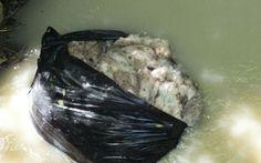 Movimento 5 stelle lancia allarme rifiuti abbandonati a Montegiorgio #m5s #rifiuti #montegiorgio