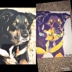 I do custom colorful animal paintings, contact me on my website for more info 😌 Colorful Animal Paintings, Colorful Animals, The Dreamers, Your Dog, Canvas Prints, Website, Dogs, Artist, Poster