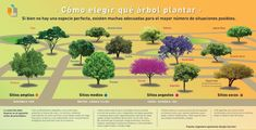 Compartimos una tabla interactiva que nos ayudará a elegir que árbol plantar en base a diferentes criterios. El espacio y el riego dos de los fundamentales.