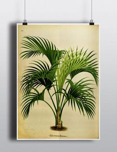 Antique 1800s Palm Tree Print Botanical Print Art Print Wall Decor Wall Art Tropical Home Decor Green Decor Nature Illustration Vintage