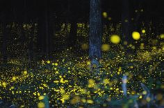35-year-old Tsuneaki Hiramatsu from Okayama City, Japan, uses long-exposure and multiple exposure photography to capture these stunning pictures of fireflies at night