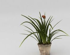 Small plant with pot  3D Model