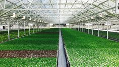 This Is The World's Largest Rooftop Greenhouse