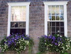 Cascading Flowers for Window Boxes | Flower Options for Window Boxes