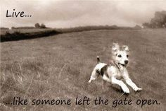 Live... like someone left the gate open  Or in our dogs case, like you're going to see the neighbors!