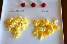 Raising Backyard Chickens - Pastured Eggs vs. Store Bought