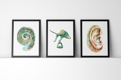 This listing is a set of The Cochlea, The Ossicles and The Ear. By buying in bulk you receive a 15% discount! Yeah! NAME: The Ear Anatomy Set PAPER & INK: The print will come on 100% cotton rag 300gsm Archival Matte Paper. This lovely museum-quality paper is acid-free and engineered for