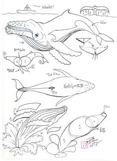 Draw+a+Humpback+Whale+by+Diana-Huang.deviantart.com+on+@deviantART