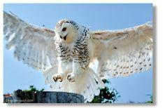 . Birds, Gallery, Photography, Austria, Animals, Photos, Fotografie, Animais, Animales