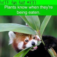 WTF Facts - Page 35 of 1045 - Funny, interesting, and weird facts Fun Facts About Animals, Animal Facts, Wow Facts, Weird Facts, Random Facts, Amazing Facts, Random Stuff, Funny Facts, Funny Memes