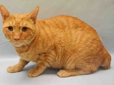 MEMOW - A1094307 - - Manhattan  ***TO BE DESTROYED 10/30/16*** Please Share:-  Click for info & Current Status: http://nyccats.urgentpodr.org/memow-a1094307/