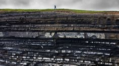 Bing Image Archive: Black-legged kittiwake colony on cliffs, Ireland (© Michel Gunther/Biosphoto/Minden Pictures)(Bing Australia)