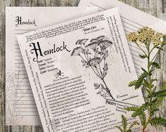 Hemlock- Grimoire Printable, Book of Shadows Printable, Poisonous Herbs, Wiccan,… - Modern Book Journal, Journals, Bullet Journal, Slippery Elm, Wiccan Witch, Poisonous Plants, Modern Witch, Any Book, Book Of Shadows