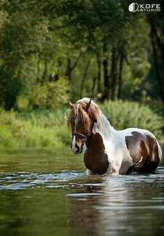 I used to love riding my horse bareback in the river at my Uncle Willie's and Aunt Janice's.