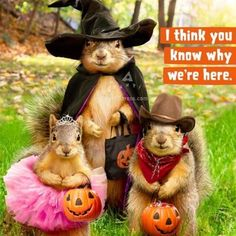 ❣  Every day is Squirrel-O'ween at my house ❣
