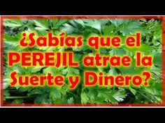 ♥ Como Tener Suerte, Dinero, Amor, Trabajo, Eliminar Hechizos, Brujerías, CON BAÑOS DE RUDA, LIMPIA - YouTube