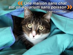 citations option bonheur citation humoristique sur le chat noir qui porte malheur citations. Black Bedroom Furniture Sets. Home Design Ideas