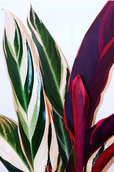 Pflanzideen colorful leaves, # leaves How To Choose The Best Knife Set Article Body: Knive Plant Aesthetic, Garden Care, Brighten Your Day, Indoor Plants, Pot Plants, Indoor Gardening, Houseplants, Planting Flowers, Plant Leaves
