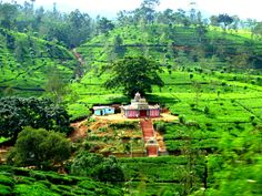 Temple outside of Ella, Sri Lanka - The Road is Always Calling